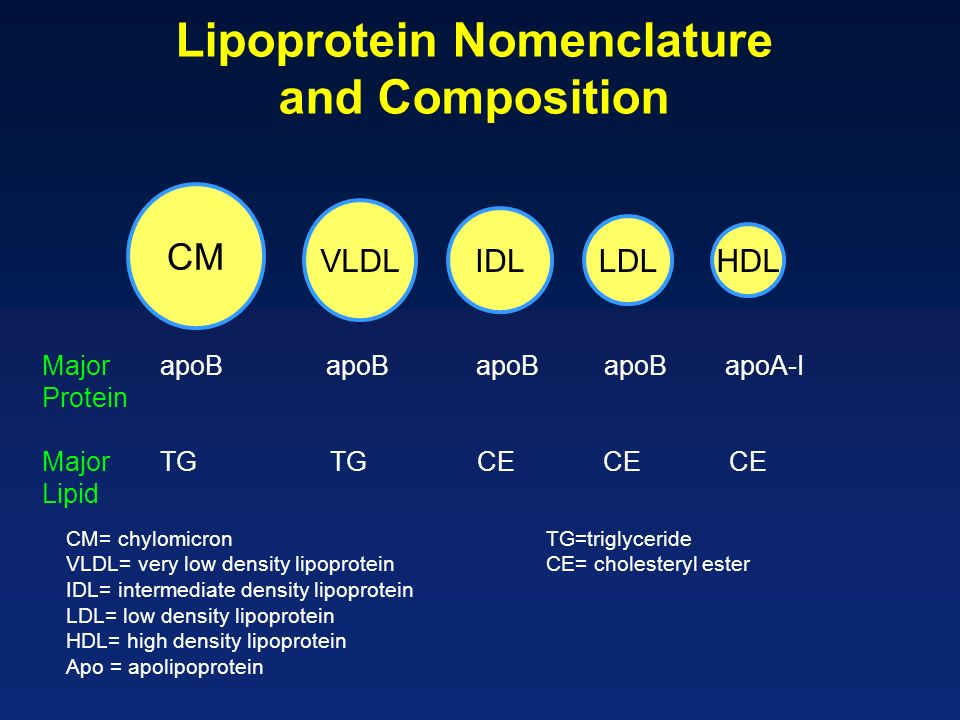 CM VLDL IDL LDL HDL Lipoprotein Nomenclature and Composition Major apoB apoB apoB apoB apoA-I Protein Major TGTG CE CE CE Lipid CM= chylomicronTG=triglyceride VLDL= very low density lipoproteinCE= cholesteryl ester IDL= intermediate density lipoprotein LDL= low density lipoprotein HDL= high density lipoprotein Apo = apolipoprotein