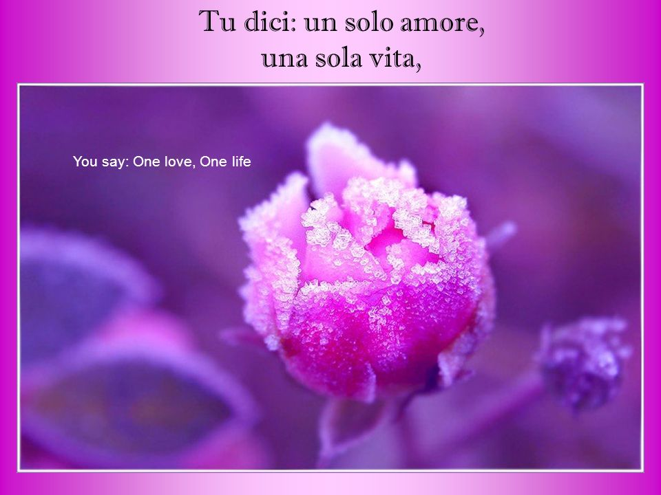 Tu dici: un solo amore, una sola vita, You say: One love, One life