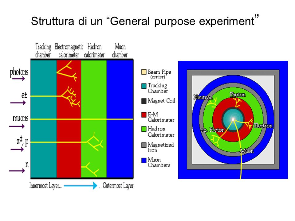 Struttura di un General purpose experiment