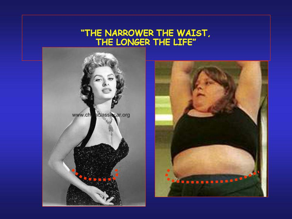 THE NARROWER THE WAIST, THE LONGER THE LIFE