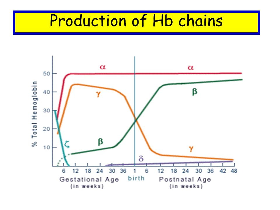 Production of Hb chains