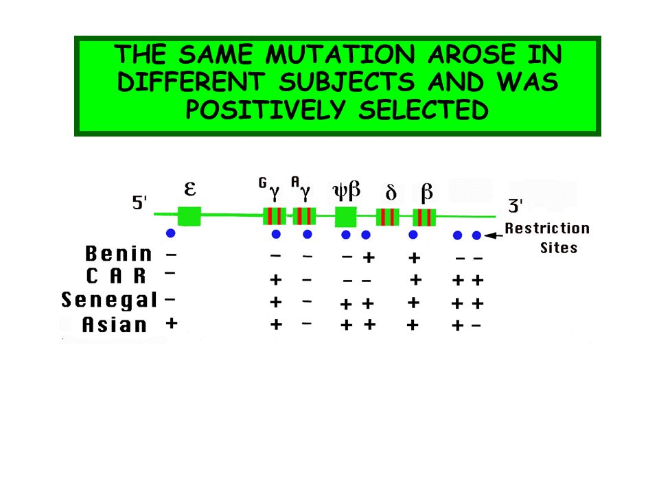 THE SAME MUTATION AROSE IN DIFFERENT SUBJECTS AND WAS POSITIVELY SELECTED