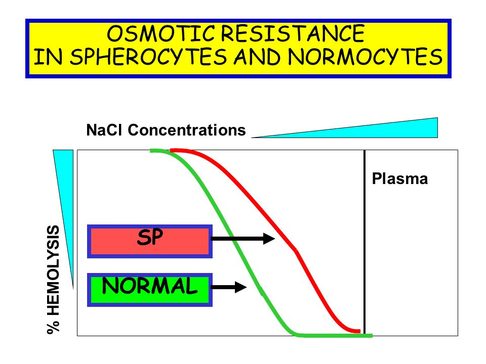 OSMOTIC RESISTANCE IN SPHEROCYTES AND NORMOCYTES NaCl Concentrations NORMAL % HEMOLYSIS SP Plasma