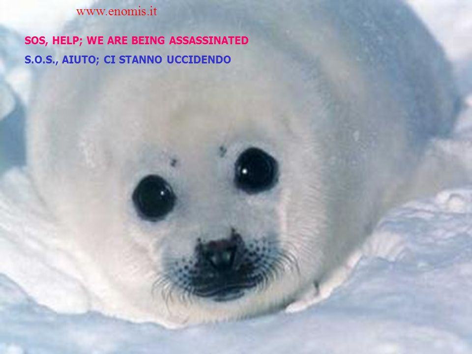 SOS, HELP; WE ARE BEING ASSASSINATED S.O.S., AIUTO; CI STANNO UCCIDENDO