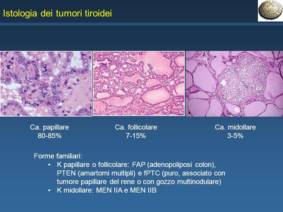 bladder cancer from hpv virus
