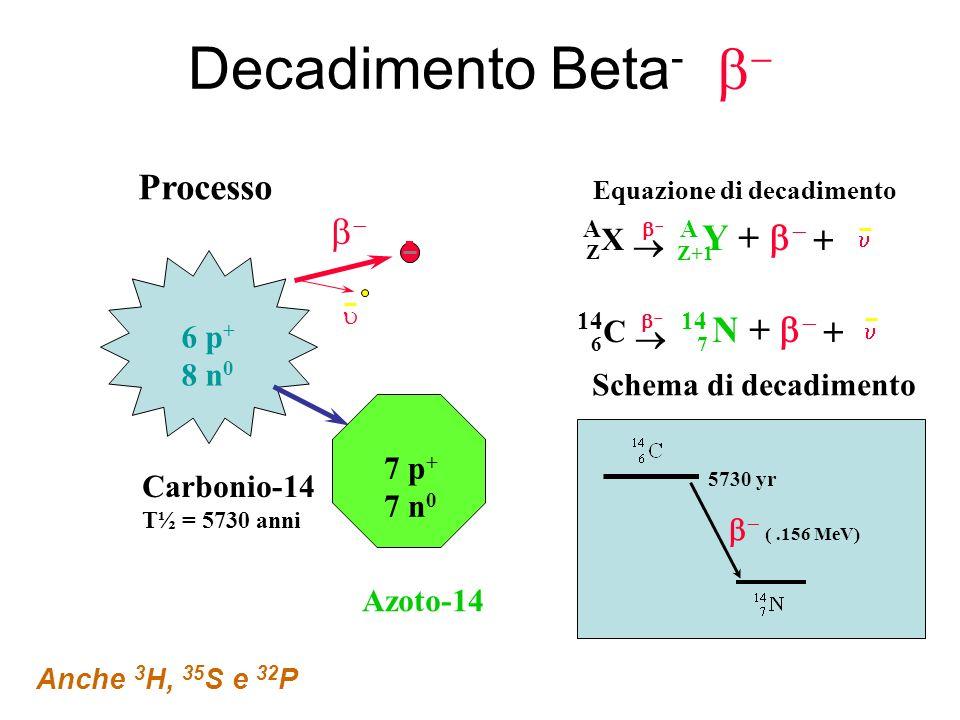carbonio datazione equazione di decadimento